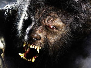 Pictures The Wolf Man