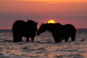 Fotos Hauspferd Wasser Silhouette Tiere