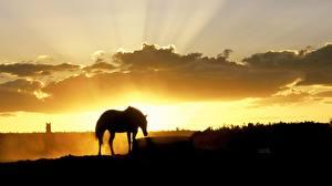 Hintergrundbilder Pferde Silhouette Lichtstrahl Tiere