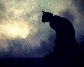Fotos Katze Silhouette Tiere