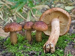 Fotos Pilze Natur Lebensmittel