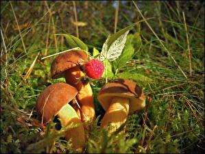Bilder Pilze Natur das Essen