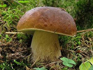 Fotos Pilze Natur