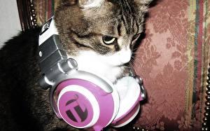Hintergrundbilder Katze Kopfhörer Tiere