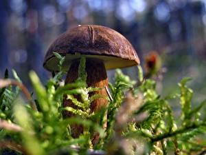 Hintergrundbilder Pilze Natur