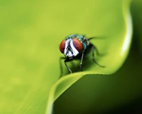 Bilder Insekten Fliegen Tiere