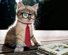 Hintergrundbilder Hauskatze Uhr Krawatte Brille Kätzchen lustige