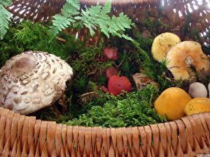 Hintergrundbilder Pilze Natur Natur