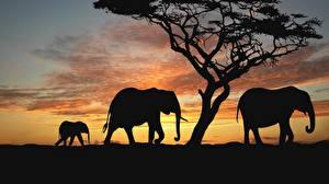 Fotos Elefanten Afrika Silhouette Tiere