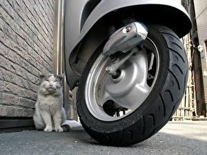 Fonds d'écran Les chats Scooter Roue Animaux
