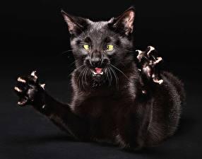 Fotos & Bilder Katze Pfote Krallen Tiere fotos