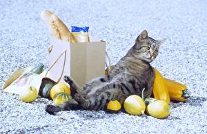 Hintergrundbilder Hauskatze Kaufen Tiere
