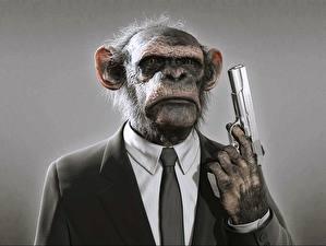 Bilder Pistolen Affen Anzug Krawatte Humor