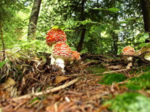 Bilder Pilze Natur Natur