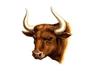 Hintergrundbilder Malerei Rinder Horn