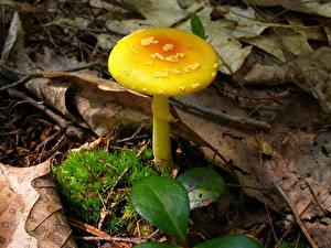Bilder Pilze Natur