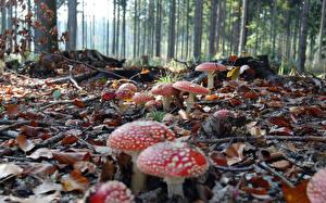 Fotos Pilze Natur Natur