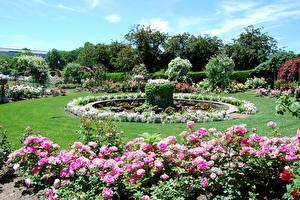 Fotos & Bilder Park Boston USA Rose gardens Natur fotos