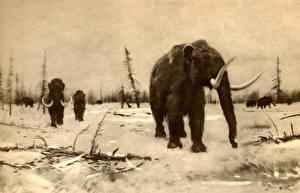 Fotos Alte Tiere Mammute Mammoth of the berezovka