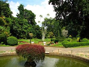 Wallpapers Gardens Sri Lanka Kandy botanical garden Nature photos