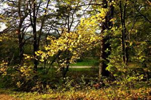 Bilder Jahreszeiten Herbst Park Vilnius Litauen vingio parkas Natur