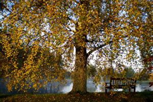 Fotos Jahreszeiten Herbst Vilnius Litauen Natur