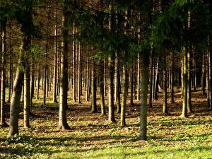 Hintergrundbilder Park Wälder Vilnius Litauen vingio parkas Natur