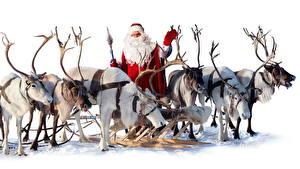 Fotos & Bilder Feiertage Neujahr Hirsche Weihnachtsmann Schlitten fotos
