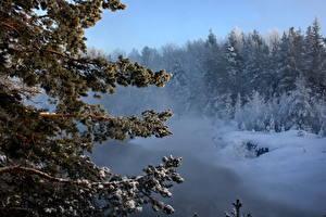 Hintergrundbilder Jahreszeiten Winter Schnee Ast Natur