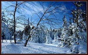 Hintergrundbilder Jahreszeiten Winter Wälder Schnee Bäume Ast Natur