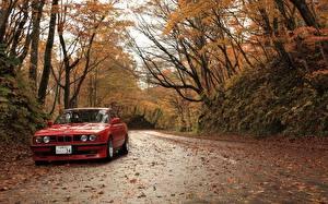 Papel de Parede Desktop BMW Estação do ano Outono Estradas Vermelho Folha carro