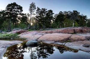 Fotos Küste Stein Finnland Helsinki Bäume Natur