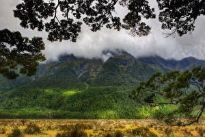 Fotos Gebirge Wälder Neuseeland Wolke Ast HDR Natur