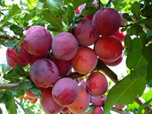 Bilder Obst Pflaume Blattwerk Ast Lebensmittel