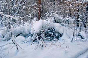 Bilder Jahreszeiten Winter Schnee Ast Natur
