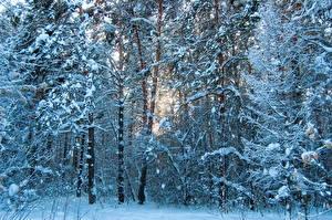 Hintergrundbilder Jahreszeiten Winter Schnee Bäume Ast Natur
