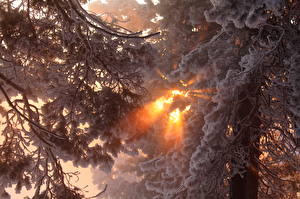 Fotos Jahreszeiten Winter Lichtstrahl Schnee Bäume Ast Natur