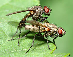Bureaubladachtergronden Insecten Vliegen