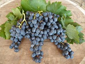Fotos Obst Weintraube Blatt Ast Lebensmittel