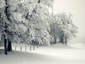 Bilder Jahreszeiten Winter Schnee Bäume Ast Natur