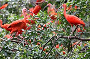 Hintergrundbilder Vögel Ast Blatt  Tiere