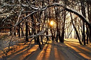 Bilder Jahreszeiten Winter Sonnenaufgänge und Sonnenuntergänge Schnee Bäume Ast Natur
