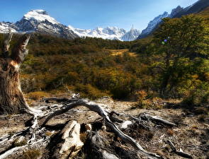 Bilder Gebirge Wälder Argentinien Trocknen Ast HDRI Natur