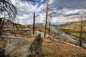 Hintergrundbilder Park Himmel Vereinigte Staaten Wolke Trocknen Bäume Ast HDR Yellowstone Natur