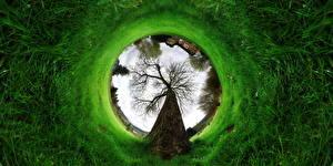 Image Creative Green Grass Trees