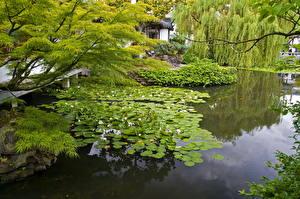 Fotos Garten Seerosen Teich Ast Natur