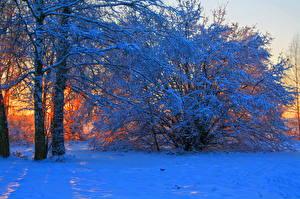 Hintergrundbilder Jahreszeiten Winter Sonnenaufgänge und Sonnenuntergänge Schnee Bäume Ast Natur