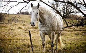 Bureaubladachtergronden Paard Kijkt Boomtakken Hoofd Gras een dier