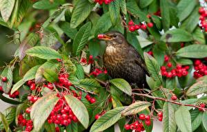 Fotos Vögel Ast Blatt  Tiere