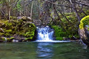 Bilder Wasserfall Bach Laubmoose Ast Natur